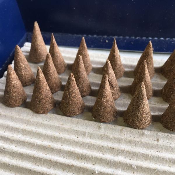 薬草の柴胡の種